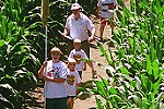 A new maze each year through a 10-acre corn field - Cherry-Crest Farm, Paradise, PA