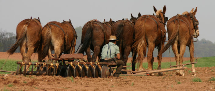 farmer-sitting-six-mule-team
