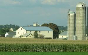 Amish Barn Raising image 7