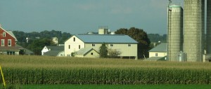 Amish Barn Raising (continued)