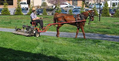 Horse-drawn Amish lawn mower.