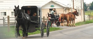 Amish buggy and team