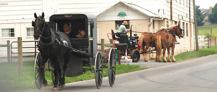 about the amish mennonites the plain people  amish and the plain people