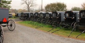 Amish buggies at a wedding