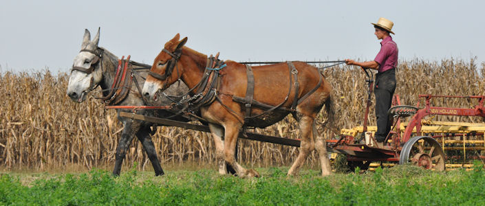 Amish People And Amish Culture Lancasterpa Com