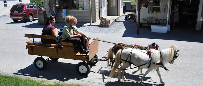 Lil' Country Store and Miniature Horse Farm - LancasterPA.com