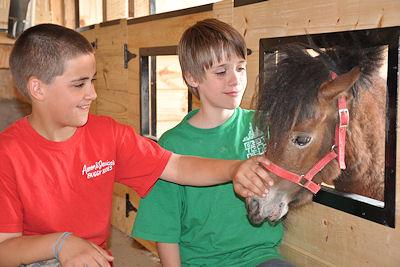 Come pet our miniature horses