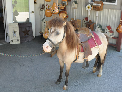 Lil Country Store - one of our miniature horses