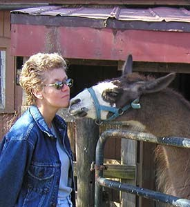 Llama and guest