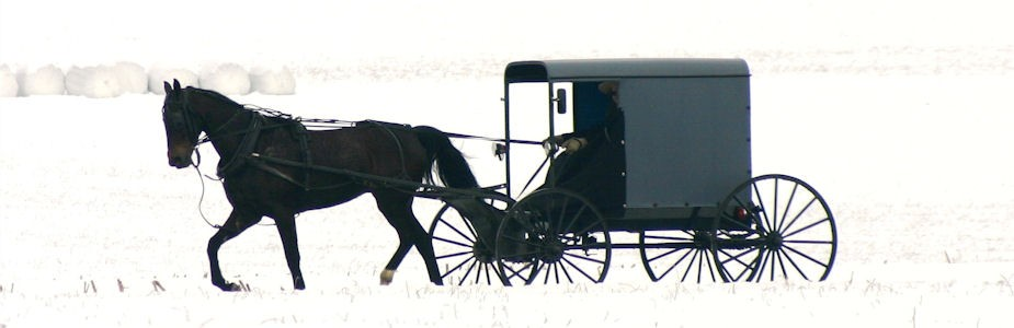 Amish Buggy in Snow
