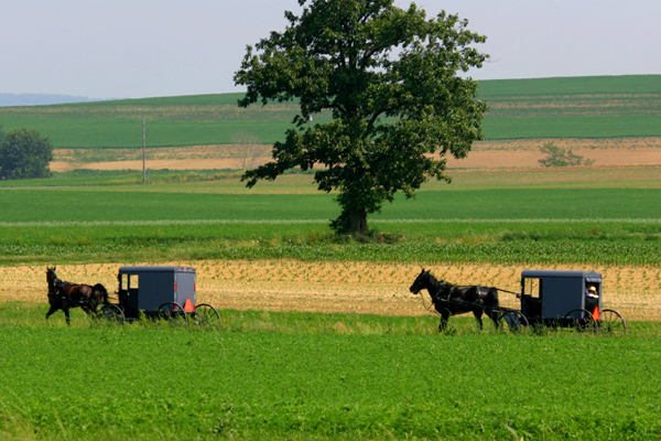 Image results for amish country