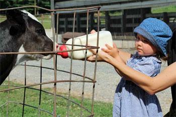Meadow View K Farm - Feeding a Calf