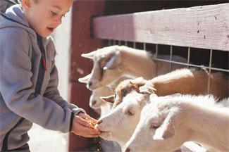 Country Log House Farm Feeding Animals
