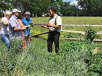 Old Windmill Farm garden tour