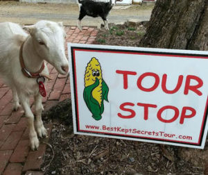 Best Kept Secret Goat