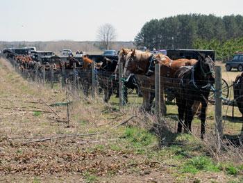 Becoming Amish - Horses