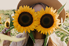 Oregon Dairy Sunflower Patch & Corn Maze - Lancaster, PA