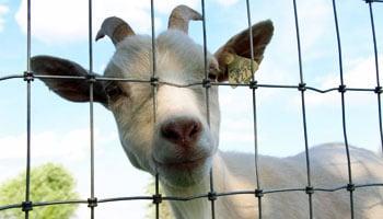 Amish Farm Stay - Stay on an Amish Farm