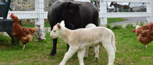 Amish Farm & House - Lancaster, PA
